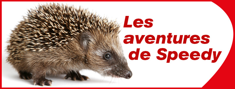Speedy: Hibernation du hérisson
